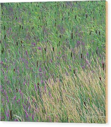 Summer Marsh Wood Print by Alan L Graham