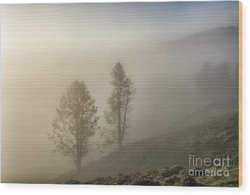 Summer Morning In Yellowstone Wood Print by Sandra Bronstein