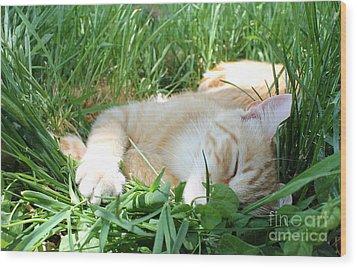 Summer Napping Wood Print