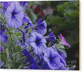 Wood Print featuring the photograph Summer Petunias by Wilma  Birdwell