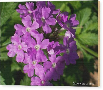 Wood Print featuring the photograph Summer Phlox by Belinda Lee