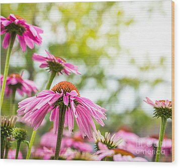 Summer Pink 1 Wood Print by Susan Cole Kelly Impressions