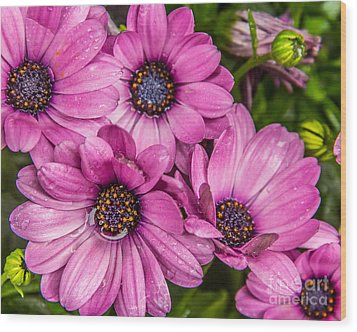 Summer Pink 3 Wood Print by Susan Cole Kelly Impressions
