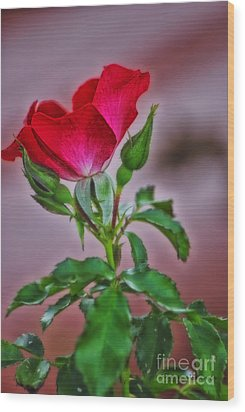 Summer Rose Wood Print by Thomas Woolworth