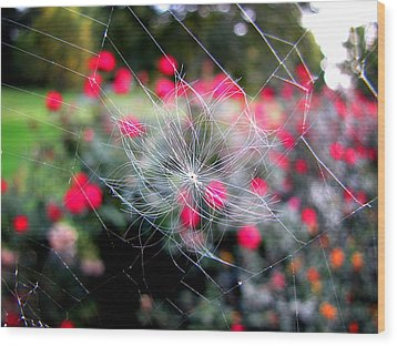 Wood Print featuring the photograph Summer Snowflake by Greg Simmons