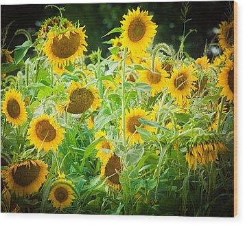 Summer Sunflowers Wood Print