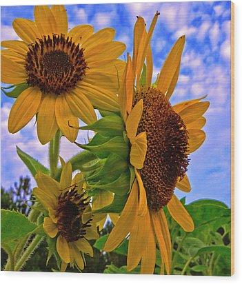 Summer Suns Wood Print