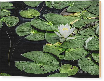 Summer Water Lily 3 Wood Print by Susan Cole Kelly Impressions