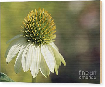 Summer White Wood Print by Mary Haber
