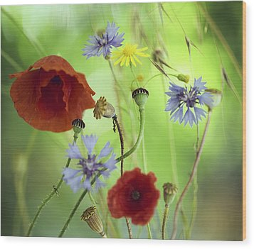 Summer Wildflower Color Wood Print