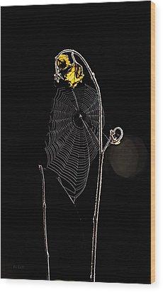 Summers Web Before Sunrise Wood Print by Bob Orsillo