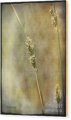 Wood Print featuring the photograph Summr Grasses V by Chris Armytage