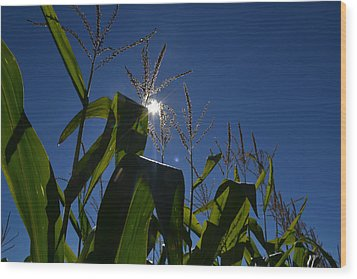 Sun Above The Corn  Wood Print