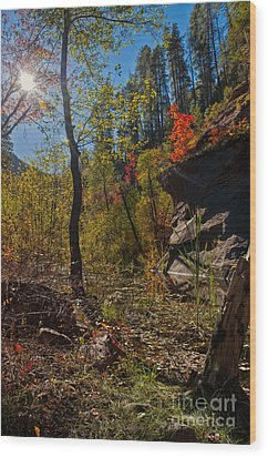 Sun And  The Tree Wood Print by Brian Lambert