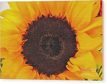 Sun Delight Wood Print by Angela J Wright