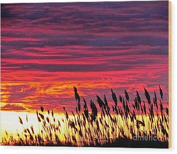 Sun Drifts To Sleep Wood Print by Q's House of Art ArtandFinePhotography