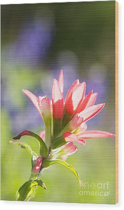 Sun Filled Paintbrush Wood Print