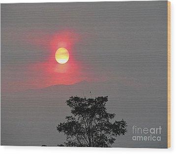 Sun Fire Tree Wood Print by Phyllis Kaltenbach