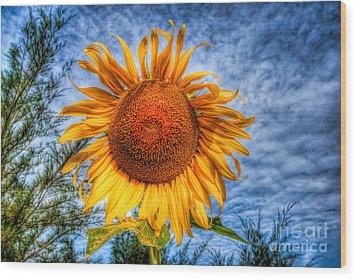 Sun Flower Wood Print by Adrian Evans