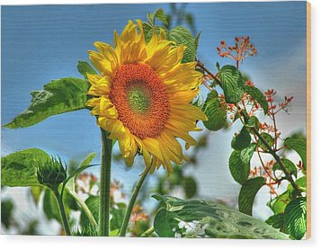Sun Flower Wood Print by Ed Roberts