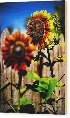 Sun Flowers Wood Print by Randall  Cogle