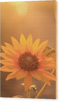 Wood Print featuring the photograph Sun Kissed by Alicia Knust