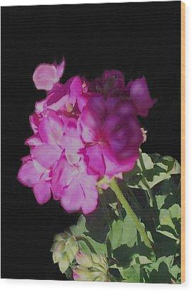Sun Kissed Geranium  Wood Print by Christine Fournier