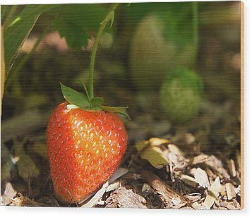 Sun Kissed Strawberry Wood Print by Kristine Bogdanovich