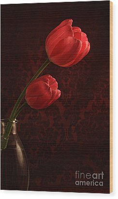 Sun Kissed Tulips Wood Print by Darren Fisher