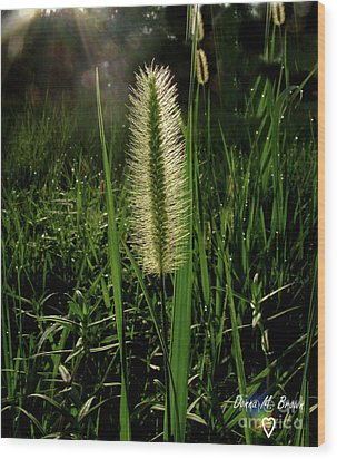 Wood Print featuring the photograph Sun-lite Grass Seed by Donna Brown