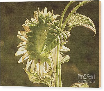 Wood Print featuring the photograph Sun-lite Sunflowwer by Donna Brown