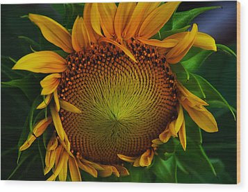 Wood Print featuring the photograph Sun Lover by John Harding