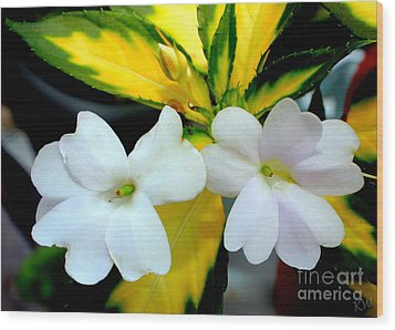 Sun Patiens Spreading White Variagated Wood Print