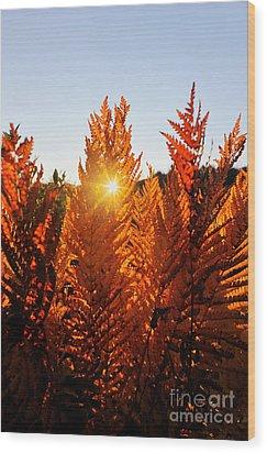 Sun Shining Through Fern Wood Print by Dan Friend
