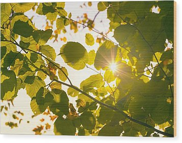 Sun Shining Through Leaves Wood Print by Chevy Fleet