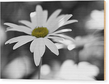 Sun-speckled Daisy Wood Print by Don Schwartz
