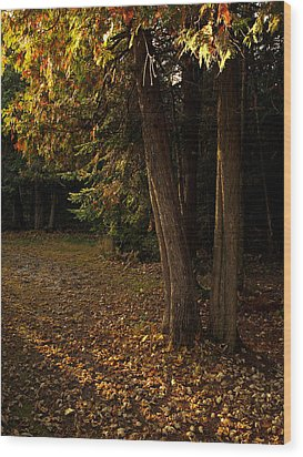 Sun Struck Cedars Wood Print by Stan Wojtaszek