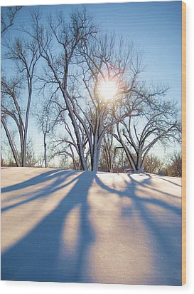 Sun Through Snow Covered Trees Wood Print by Alicia Knust