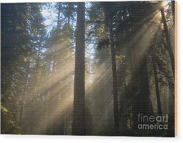 Sun Through The Redwoods Wood Print