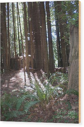 Wood Print featuring the photograph Sun Through The Sequoias by Suzanne McKay