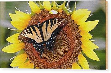 Sunbather Wood Print by Cole Black