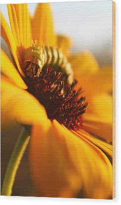 Sunbathing Caterpillar Wood Print