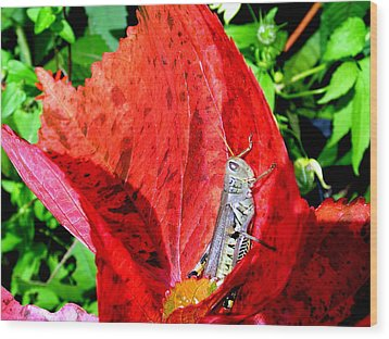 Wood Print featuring the photograph Sunbathing by Zafer Gurel