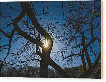 Sunburst In The Orchard Wood Print