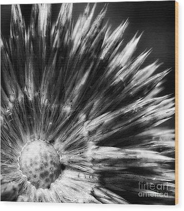 Wood Print featuring the photograph Sunburst by Inge Riis McDonald