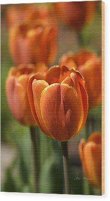 Sunburst Tulips Wood Print by Julie Palencia