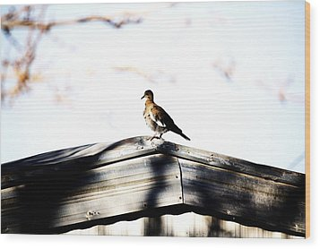 Wood Print featuring the photograph Sunday Morning  by Jessica Shelton