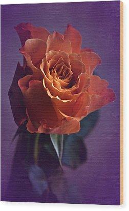 Sunday Rose  Wood Print