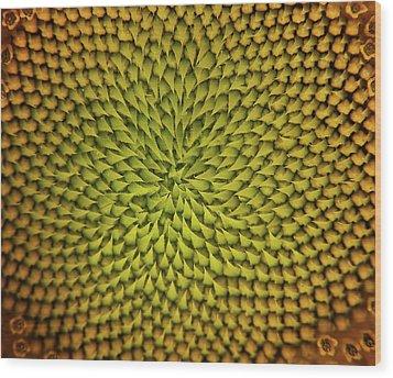 Wood Print featuring the photograph Sunflower Sundial by Britt Runyon