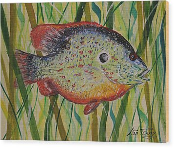 Sunfish Wood Print by Stan Tenney